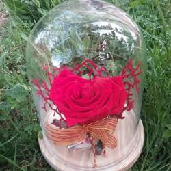 Rosa roja preservada y coral