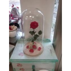Rosa de la Bella i la Bèstia