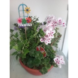 Plantas llenas de color