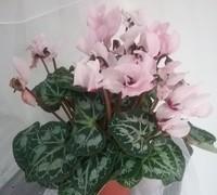 Plantas de exterior de diferentes tamaños, colores y presentaciones.